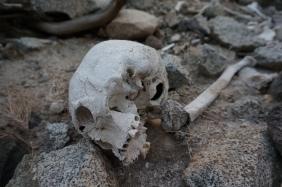 Pre Incan Ruins & Remains