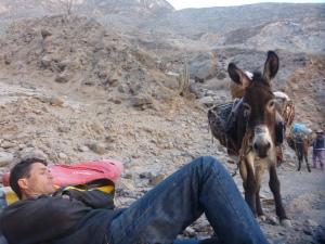 Donkey portage!